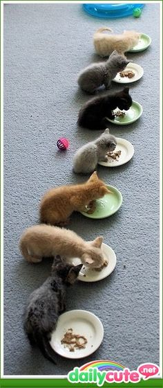 Aww... Love how the one thinks his brother's food might be better.