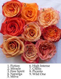 Orange Wedding Flowers, Orange Flowers, Love Flowers, Colorful Flowers, Orange Flower Names, Coral Roses, Orchid Flowers, Orange Rosen, Fleur Orange