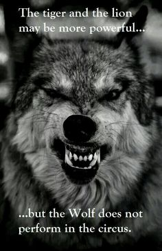 The wolf doesn't perform in the circus