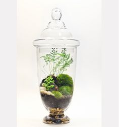 terranium: I know I can get some nice glass containers at the dollar store