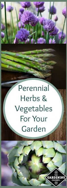 Perennial herbs and vegetables in your garden are so nice because they return year after year. Try planting some of these this year and enjoy the crop for years to come.