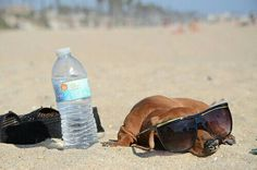 Dachshund chillin' at the beach
