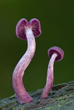 Amethyst Deceiver by Guy Edwards