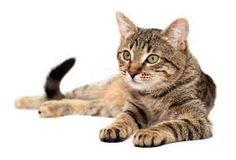tips agar Kucing Anda Tidak Stres ketika Sendirian di Rumahg Gatos Cool, Common Myths, Cat Sitting, Cool Cats, Cat Day, Cats Of Instagram, Your Pet, Cat Lovers, Dog Cat