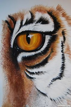 The making of drawing picture THe Eye of the Tiger for the tigers td drawing contest, explained step by step. Tiger Face Drawing, Cat Drawing, Drawing Guide, African Art Paintings, Animal Paintings, Animal Drawings, Tiger Painting, Pebble Painting, Hard Drawings