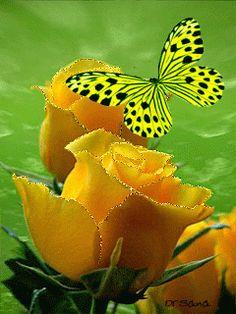 Mariposa y rosas