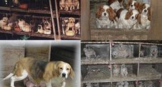 Petition · Malcolm Turnbull: Make puppy farming illegal · Change.org