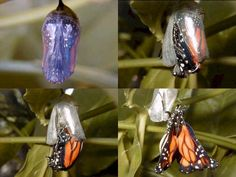 """""""VIDA""""  Gosto de borboletas. me fazem lembrar que na vida, tudo se transforma.   SEMPRE!!!"""