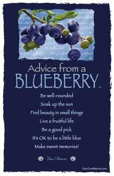 Advice from a Blueberry - Postcard - Your True Nature