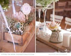Same flowers (proteas, white and pink waxy flowers, succulents, desert roses) but prefer low glass vases on wooden tables High Tea Wedding, Safari Wedding, Wedding Cape, Fall Wedding, Protea Wedding, Wedding Flowers, Boho Wedding Decorations, Table Decorations, Protea Centerpiece