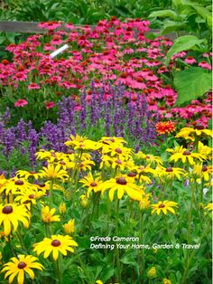These are must haves--dark pink echinacea, purple salvia,yellow rudbeckia prairie fire--this plus holly hock , catmint (blue) and some white beebalm or coneflower would be in bloom July-Sept Beautiful Gardens, Beautiful Flowers, Landscape Design, Garden Design, Rose Campion, Home And Garden Store, Black Eyed Susan, Garden Photos, Dream Garden