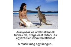 Kangaroo, Lol, Humor, Animals, Baby Bjorn, Animales, Animaux, Humour, Funny Photos