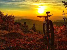 Moutain Bike, Mountain Biking, Motorcycle Logo, Inline Skating, Military Gear, Cycling Art, Mtb Bike, Camping Life, Cycling Outfit
