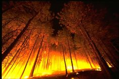 You can not outrun a forest fire. Do not make this mistake - it can not be done. Learn what to do if you are caught in a wild fire. - http://www.extremesurvivors.com/wildfiresurvival.html