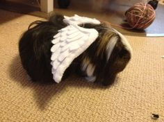 Guinea Pig Angel Wings Tutorial. Works for American Girl Dolls as well.
