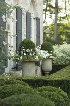 Elegant classic topiary and climbing roses