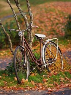Fahrrad fahren im Herbst.