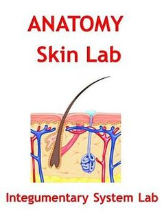 This Skin Lab is part of my Integumentary System (Skin) unit covering the skin and associated functions in the human body. This lab is very flexible as it will work for any level student from English Learner - EL - to more advanced students.  $