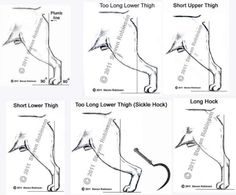 Rears Dog Grooming Styles, Pet Grooming, Chien Fox Terrier, Labrador Breed, Dog Anatomy, Dog Breed Info, Smooth Fox Terriers, Purebred Dogs, Animals
