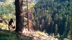 На Закарпатті необережного лісоруба вбила гілка дерева - http://mukachevo.today/na-zakarpatti-neoberezhnogo-lisoruba-vbila-gilka-dereva/