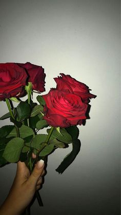 My love for you if like a rose that never dies but only grows - Wallpaper - Flowers Aesthetic Roses, Red Aesthetic, Aesthetic Photo, Aesthetic Pictures, Tumblr Wallpaper, Flower Wallpaper, Wallpaper Backgrounds, Love Flowers, Beautiful Flowers