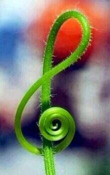 Espirales en las plantas. | Matemolivares