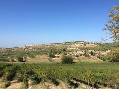 Vines at the Cefalicchio vineyard, Puglia