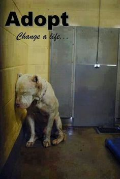 Adopt! Change a life.