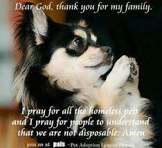 Dear God, Thank you for my my family . I pray for all the homeless pets and I pray for people to understand that we are not disposable . Amen ...