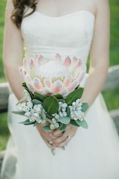 native bouquet - king protea and gum nuts Bouquet De Protea, Tropical Wedding Bouquets, Protea Wedding, Wedding Flowers, Bouquet Wedding, Wedding Ceremony, Bride Bouquets, Wedding Bouquets, Dresses