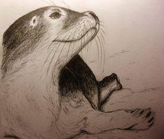 Sweet little seal