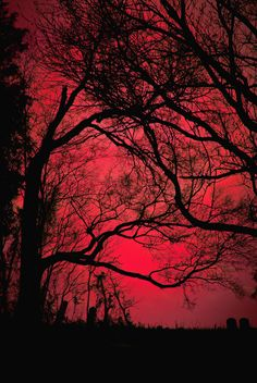 Red sky through trees Aesthetic Colors, Aesthetic Photo, Aesthetic Pictures, Maroon Aesthetic, Autumn Aesthetic, Facebook Image, Shades Of Red, Belle Photo, Aesthetic Wallpapers