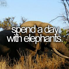 Spend a day with elephants.