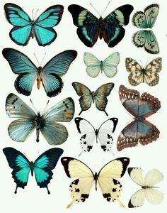 Forums / Images & Graphics / Butterflies - Swirlydoos Monthly Scrapbook Kit Club - use this for coloring inspiration on butterlies Scrapbook Kit, Scrapbooking, Vintage Clipart, Art Papillon, Doodle Drawing, Illustration Botanique, Butterfly Wings, Butterfly Design, Vintage Butterfly Tattoo