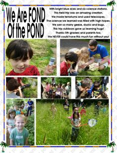 we went to a pond Easter Plants, Science Stations, High Hopes, Pond, Insects, Kindergarten, Learning, Spring, Animals