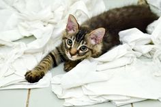 20 Funny Cats Play with Toilet Paper make you laugh Funny Cats, Funny Animals, Cute Animals, Plumbing Humor, Animal Collective, Cat Hotel, Pet Friendly Hotels, Kittens Playing, Bathroom Humor