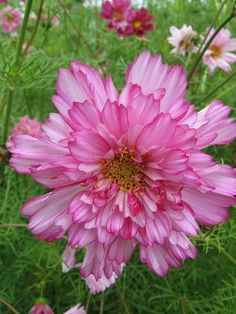 My Flowers G+ - Comunidade - Google+