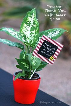 """Teacher Appreciation Week Discover Teacher Appreciation Flower Gift Idea I am so happy to have found this idea! this is totally what my girls are going to do for their teacher thank you gifts this year.""""thank you for helping me grow"""" plant"""