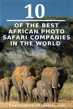 Photographing wildlife in Africa is a life-changing experience. If you've dreamed of doing so, the most economical (relatively speaking) way is to join a group. There are many great African photo…More Wildlife Photography Tips, Travel Photography, Travel Couple, Family Travel, All About Africa, Travel Guides, Travel Tips, Travel Photos, Travel Destinations