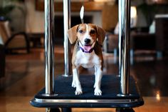 Pet-Friendly New York City Hotels – Where to Stay With a Dog or Cat in NYC
