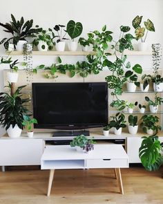 11 tips for styling an epic plant shelfie at home - Indoor plants - 11 tips for styling an epic plant shelfie at home - House Plants Decor, Plant Decor, Living Room Decor, Bedroom Decor, Deco Nature, Bedroom Plants, Plant Shelves, Indoor Plants, Indoor Plant Wall