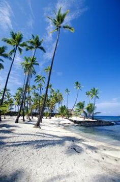 17 Uh Of Manoa Ideas Manoa University Of Hawaii University Of Hawaii At Manoa
