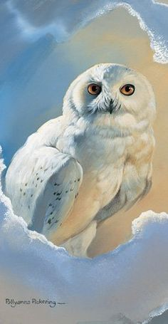 Snowy Owl Greeting Card Owl Magic by Pollyanna Pickering: Amazon.co.uk: Kitchen & Home