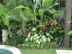 Tropical Pool Landscaping, Tropical Patio, Tropical Garden Design, Tropical Plants, Backyard Landscaping, Tropical Gardens, Balinese Garden, Bali Garden, Backyard Garden Landscape