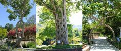 Man Spends 40 Years Bending Trees into Mesmerizing Works of Art
