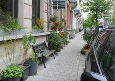 Sinds 2015 mag je de stoep voor een klein deel inpalmenom je straat te sieren. Lees hier hoe jeeenvoudigeenplantenbak of zitbank kan installeren.