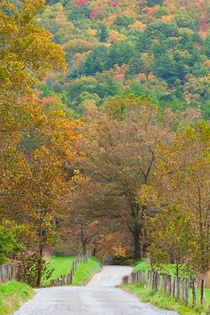 country road in Cades Cove, Great Smoky Mountains National Park, Tennessee | Andy Cook, RMRP