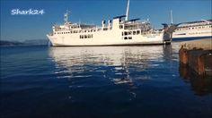 Φώκια μέσα στο λιμάνι της Κέρκυρας - SEAL IN CORFU PORT