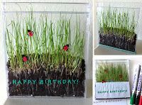 Art Projects for Kids: Grass in a CD Case – Living Art