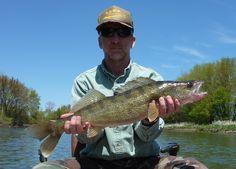 Walleye. Fishing for walleye